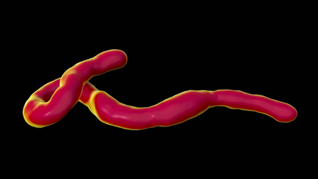 ebola virus particle, animation - human muscle stock videos & royalty-free footage