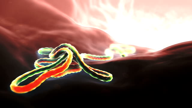 ebola virus particle - 2014 stock-videos und b-roll-filmmaterial