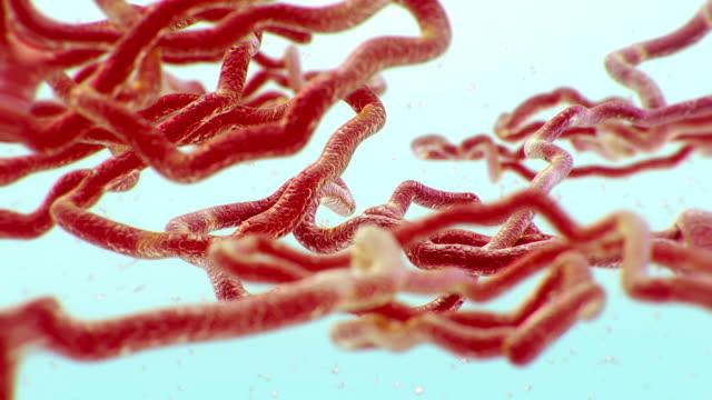 ebola virus - chromosome stock videos & royalty-free footage
