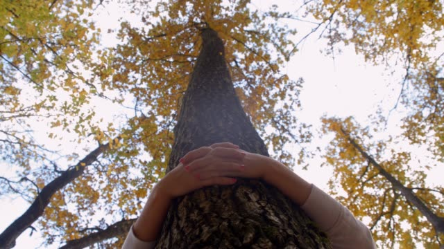 eco-friendly girl hugging autumn tree in woods, real time - tree hugging stock videos & royalty-free footage