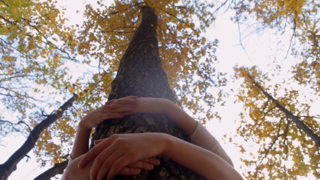 eco-friendly girls hugging autumn tree in woods, real time - tree hugging stock videos & royalty-free footage