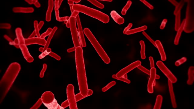 ecoli bacteria red - bacillus subtilis stock videos & royalty-free footage
