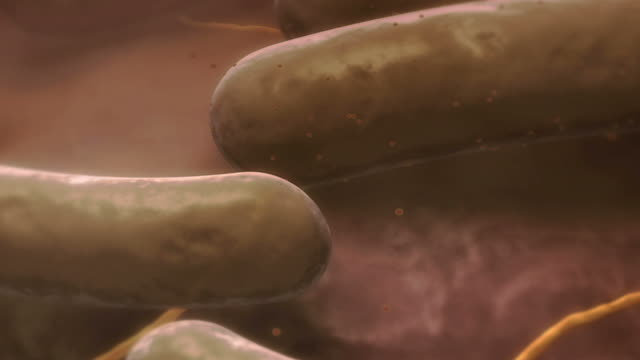 e.coli - biomedical illustration stock videos & royalty-free footage