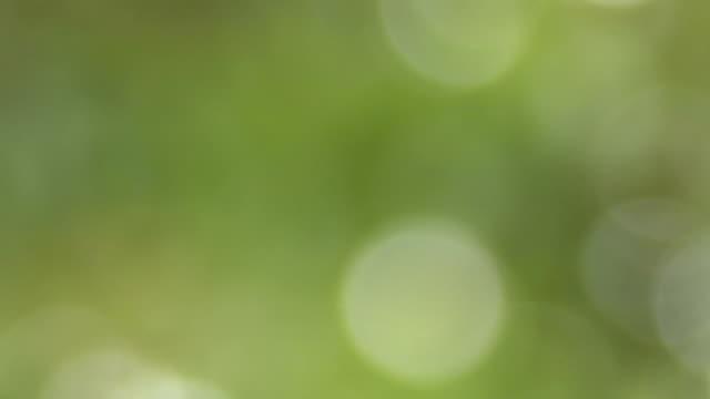 ecological background 2 - softfokus bildbanksvideor och videomaterial från bakom kulisserna