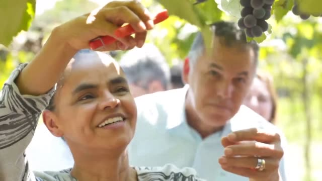 ecologist candidate marina silva one of the favourites of next october presidential election visits a sustainable farm in the state of goias... - herbicide stock videos & royalty-free footage