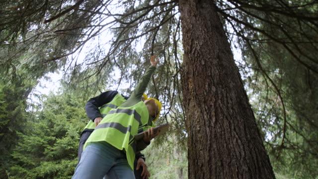vídeos de stock, filmes e b-roll de ecologistas no trabalho de campo. examinando a condição natural da floresta e coletando amostras para pesquisas mais profundas. - forester