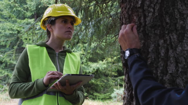 ecologists on the fieldwork. examining the natural condition of the forest and taking samples for deeper research. - environmentalist stock videos & royalty-free footage