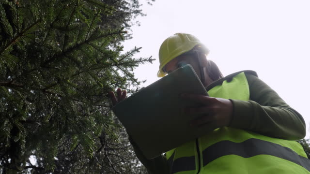 ecologists on the fieldwork. examining the natural condition of the forest and taking samples for deeper research. - forest stock videos & royalty-free footage