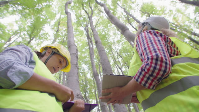 vídeos de stock, filmes e b-roll de ecologistas no trabalho de campo. examinando a condição natural da floresta e coletando amostras para pesquisas mais profundas. cuidado e sustentabilidade do ecossistema. - amostra científica