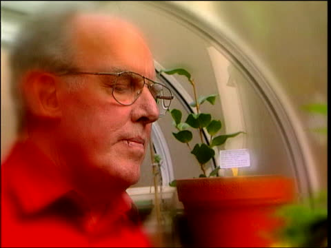vídeos de stock, filmes e b-roll de pensions serps scandal itn pensioner fred brooks in conservatory and watering plants fred brooks interview sot talks of feeling betrayed by the... - soft focus