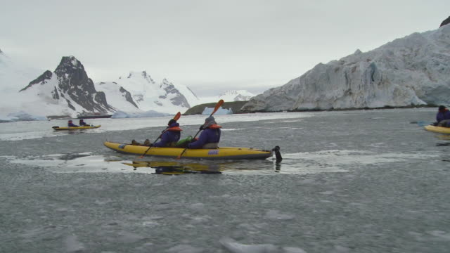 pov eco-tourists kayak in marguerite bay / antarctic peninsula, antarctica - eco tourism stock videos & royalty-free footage