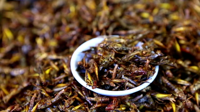 edible insect food thai cuisine thailand - cricket insect stock videos and b-roll footage