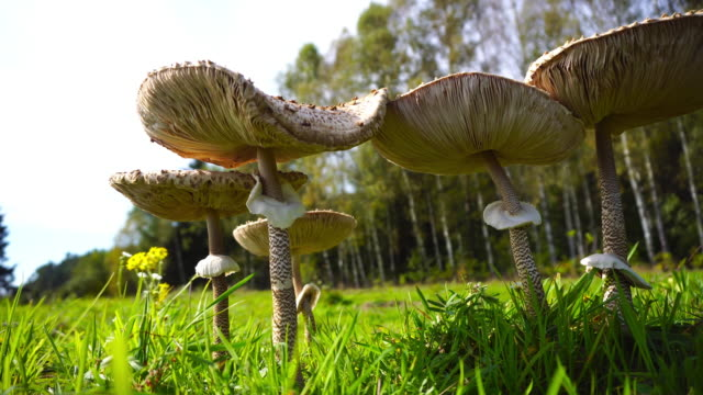edible mushroom - low angle view stock videos & royalty-free footage