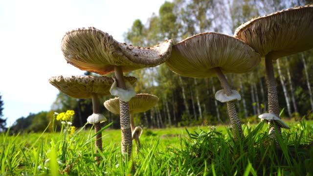 ätlig svamp - grodperspektiv bildbanksvideor och videomaterial från bakom kulisserna