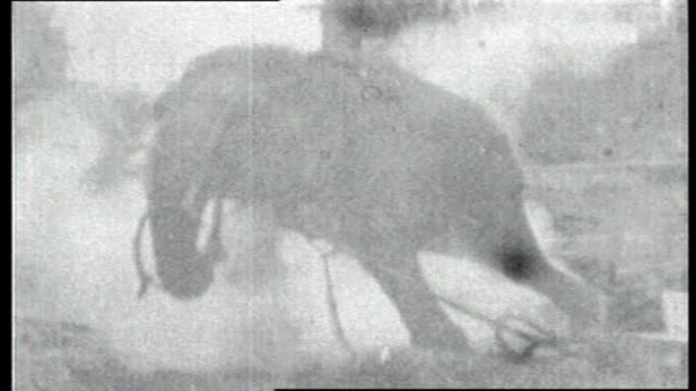 edison biograph paper print filmed at dreamland park coney island / two men leading a large elephant in specially built harness to a special steel... - coney island brooklyn stock videos & royalty-free footage