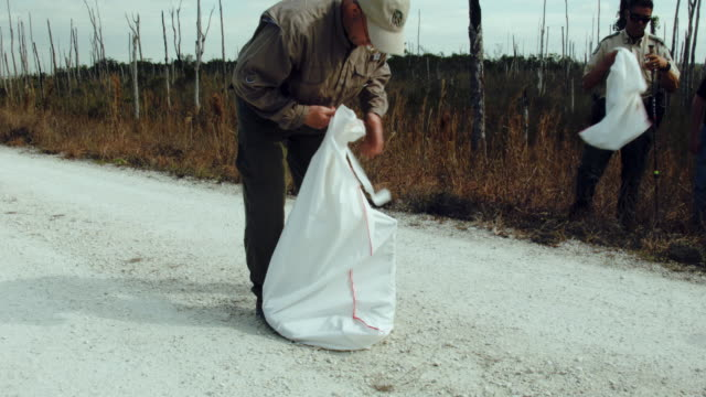 edward mercer a florida fish and wildlife conservation commission nonnative wildlife technician takes a burmese python out of a bag during a press... - everglades national park stock videos & royalty-free footage