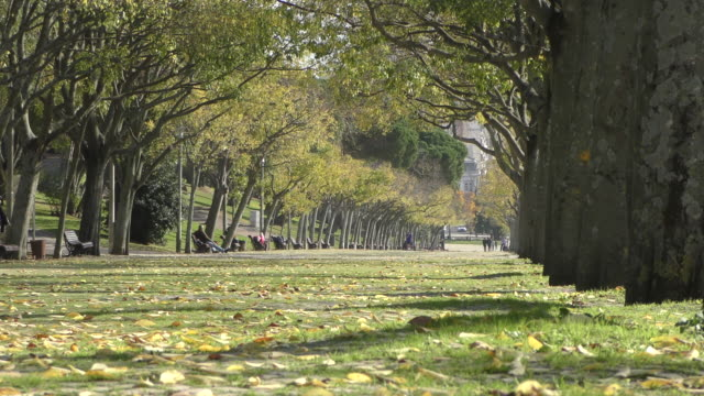 edward vii park in lisbon - low angle view stock videos & royalty-free footage