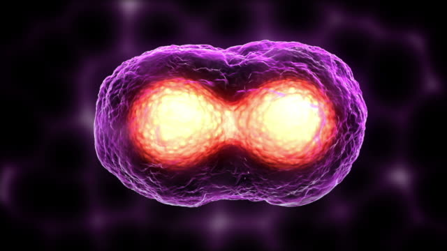 egg cell mitosis purple - virus stock videos and b-roll footage