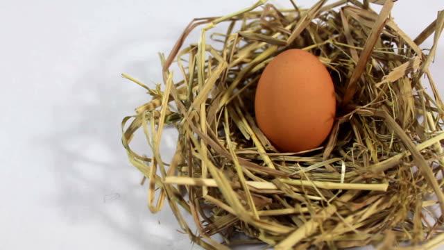 Egg in nest.