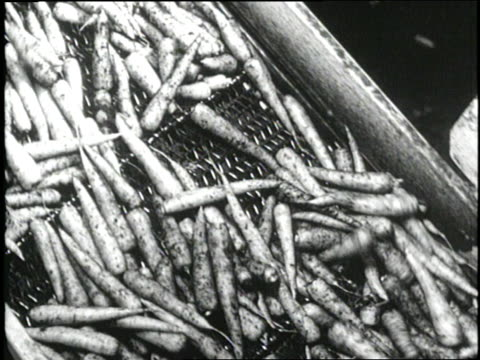 vidéos et rushes de eggs carrots and potatoes spill onto conveyor belts in a food processing plant - carotte