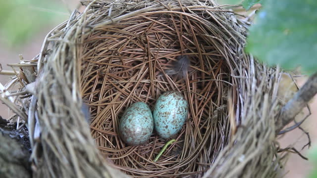 eggs in nest - small group of objects stock videos & royalty-free footage