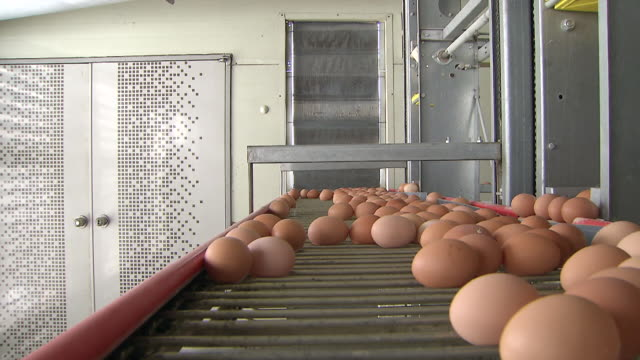 ms pov eggs moving on conveyor belt / anseong, gyeonggi-do, south korea - food processing plant stock videos and b-roll footage