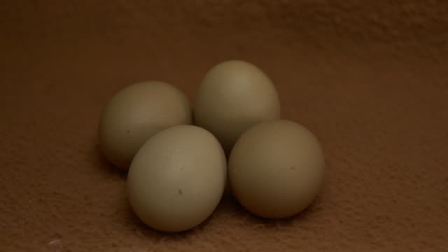 eggs on a brown background are illuminated - brown background stock videos & royalty-free footage