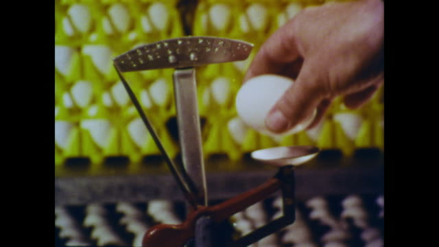 1966 eggs weighed to determine size category and quality for grading - waage gewichtsmessinstrument stock-videos und b-roll-filmmaterial