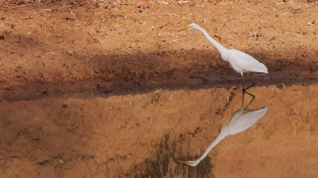 egret by water / india - egret stock videos & royalty-free footage