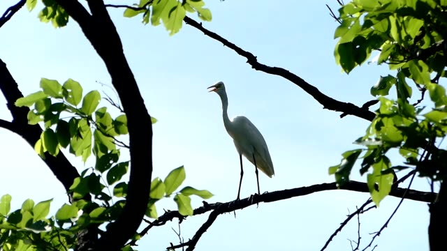 egret on the tree - egret stock videos and b-roll footage
