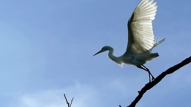 egret on the tree - egret stock videos & royalty-free footage