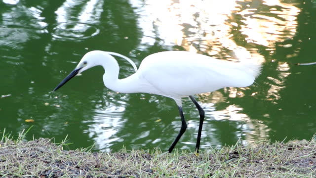 egret - egret stock videos and b-roll footage