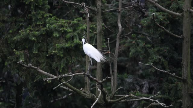 egret - cinque animali video stock e b–roll