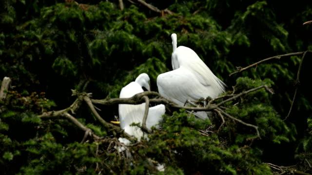 egret - north gyeongsang province stock videos & royalty-free footage