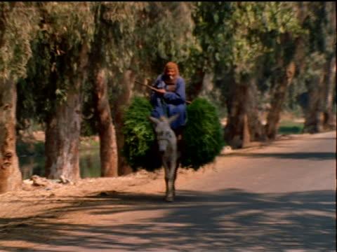 stockvideo's en b-roll-footage met egyptian man riding plant-laden donkey on tree-lined road toward camera / cairo/giza / egypt - werkdier