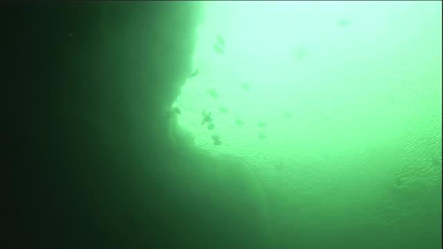 eider ducks dive near sea ice in a polynya. - ホンケワタガモ点の映像素材/bロール