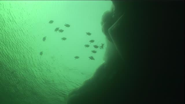 eider ducks dive underwater in polynya. available in hd. - ホンケワタガモ点の映像素材/bロール