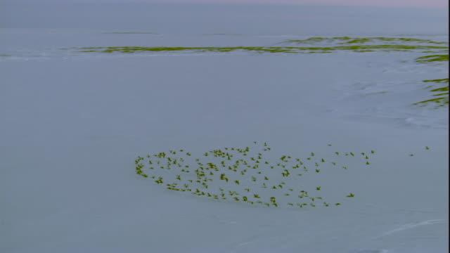 eider ducks fly across frozen coast. available in hd. - ホンケワタガモ点の映像素材/bロール