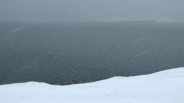 eider ducks swim off the coast of the snaefellsnes peninsula in iceland.  - medium group of animals stock videos & royalty-free footage