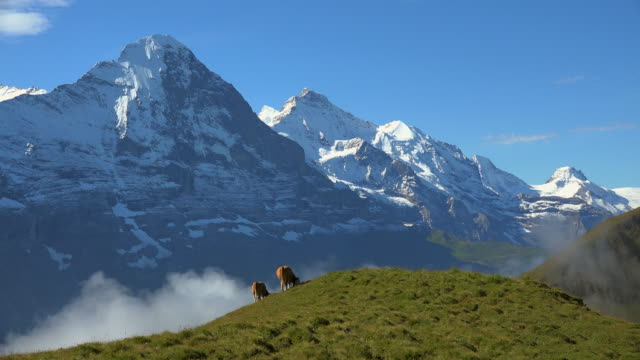 vídeos de stock e filmes b-roll de eiger and jungfrau seen from first, bernese oberland, canton of bern, switzerland - suíça