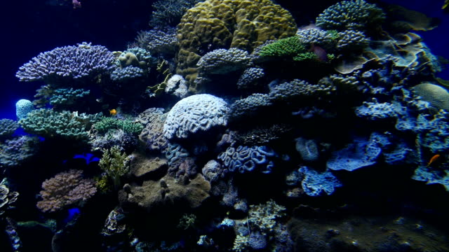 eilat marine centre-tropical fish swimming in aquarium with coral reef in background , israel - calcium carbonate stock videos and b-roll footage