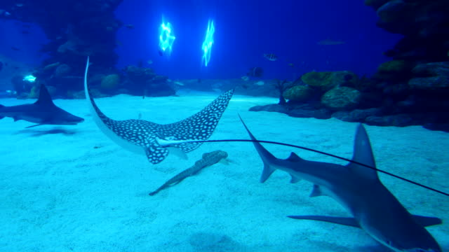 vídeos de stock e filmes b-roll de eilat marine centre-water tank with rays, corals and fish, israel - aquário edifício para cativeiro animal