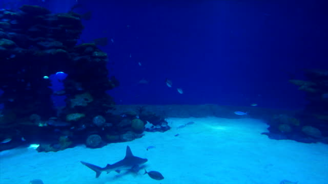 vidéos et rushes de eilat marine centre-water tank with rays, sharks, corals and fish, israel - poisson