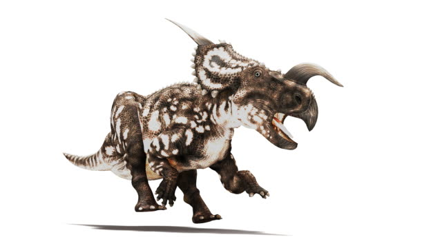 einiosaurus dinosaur animation. this horned herbivorous dinosaur is known from fossils discovered in montana, usa. it dates from the late cretaceous period, 65 to 100 million years ago. for the rgb and image mask, see image number k002 5506 - erbivoro video stock e b–roll