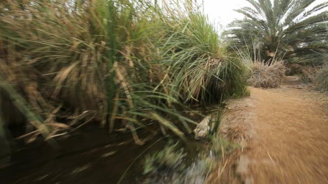 einot tzukim nature reserve on the northwestern shore of the dead sea, judea desert, israel/ steady cam shot - オアシス点の映像素材/bロール