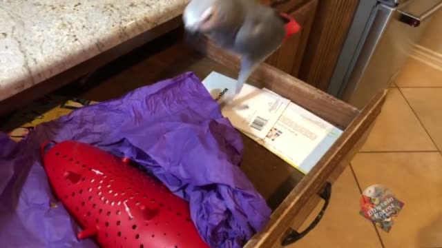 einstein had a hatchday party recently it's like a birthday but since parrots are hatched they are called 'hatchday' he received cards and well... - tissue paper stock videos & royalty-free footage