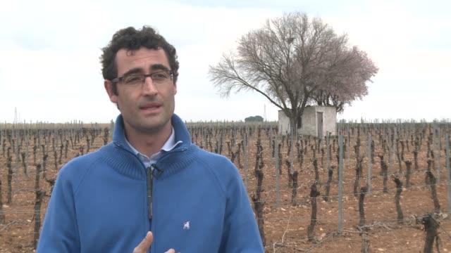 vídeos de stock, filmes e b-roll de el 2013 ha sido un ano record para el vino espanol el pais se ha convertido en el primer productor mundial con mas de 50 millones de hectolitros - vino
