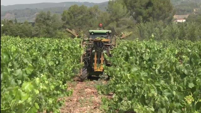 vídeos de stock, filmes e b-roll de el cava el vino espumoso espanol vendio 154 millones de botellas el pasado ano diez millones mas que su primo frances el champan - vino