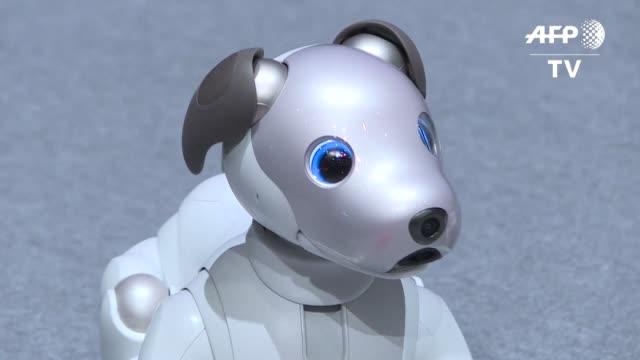 vídeos de stock e filmes b-roll de el gigante japones de la electronica sony presento el miercoles en tokio la nueva version del perro robot aibo conectado a internet y repleto de... - sony