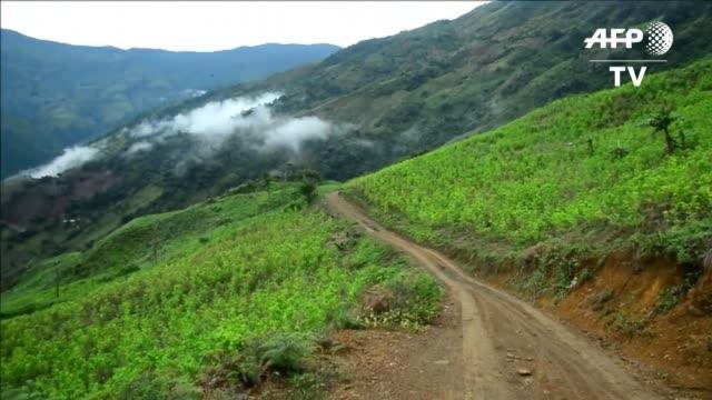 El gobierno de Colombia inicio un programa de sustitucion de cultivos de coca en el noroeste del pais con apoyo de la guerrilla FARC